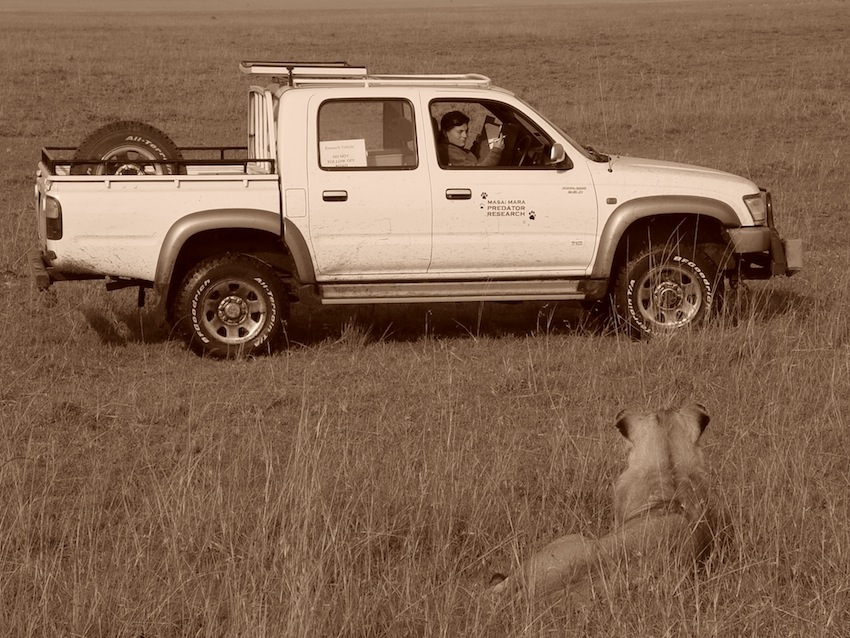 Stephanie collects data on lion numbers in the Masai Mara in 2005.