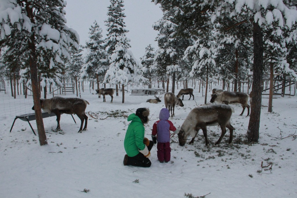 Learning about reindeer and the Sami people.