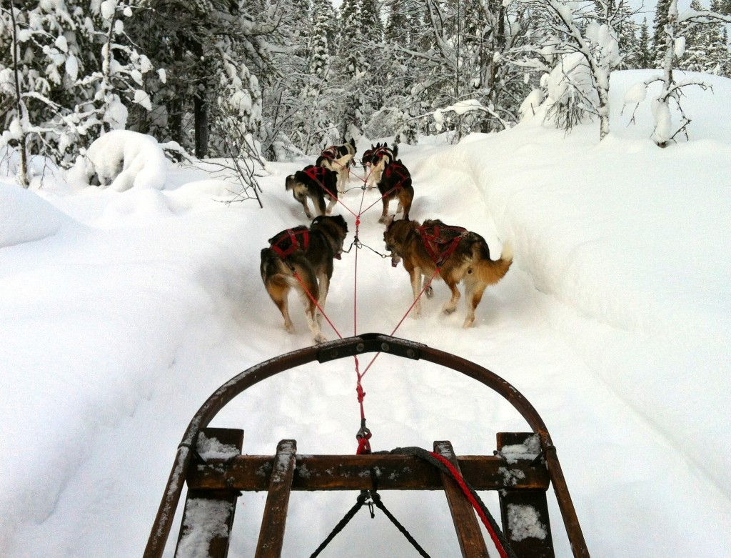 Driving the family sled team through Swedish Lapland!