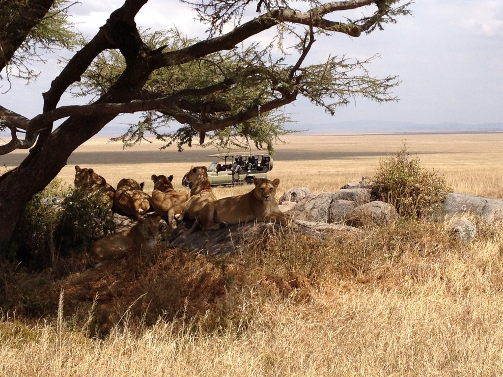 The essence of our time in the Serengeti.