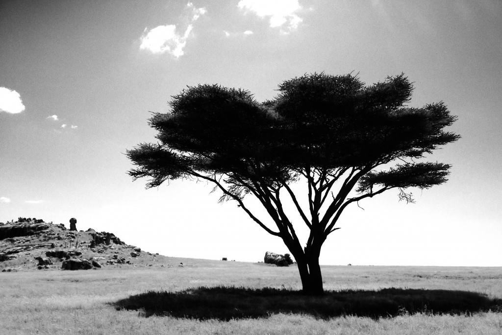 Classic Serengeti in black and white.